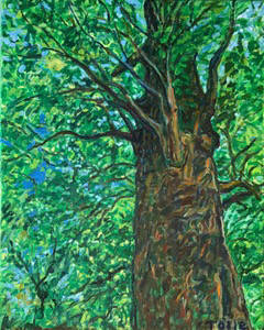 Artist: Pat Tolle, Title: Mighty Oak - click for larger image