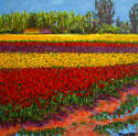 Pat Tolle - Tulips After Rain